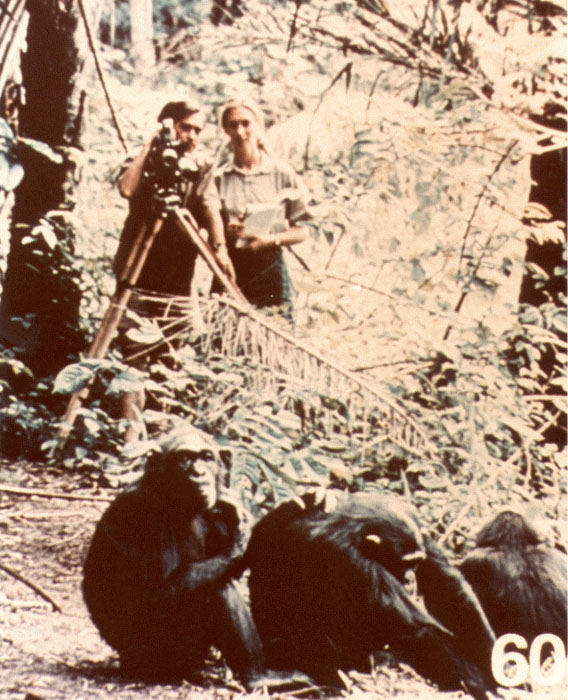 Jane Goodall and chimps